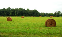 Hay Rolls, New York